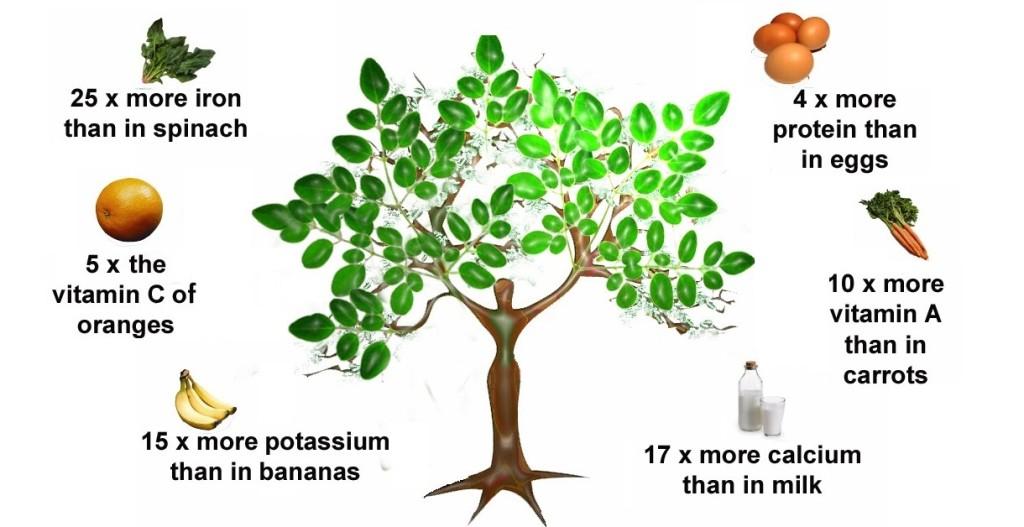 Moringa Nutritional Profile