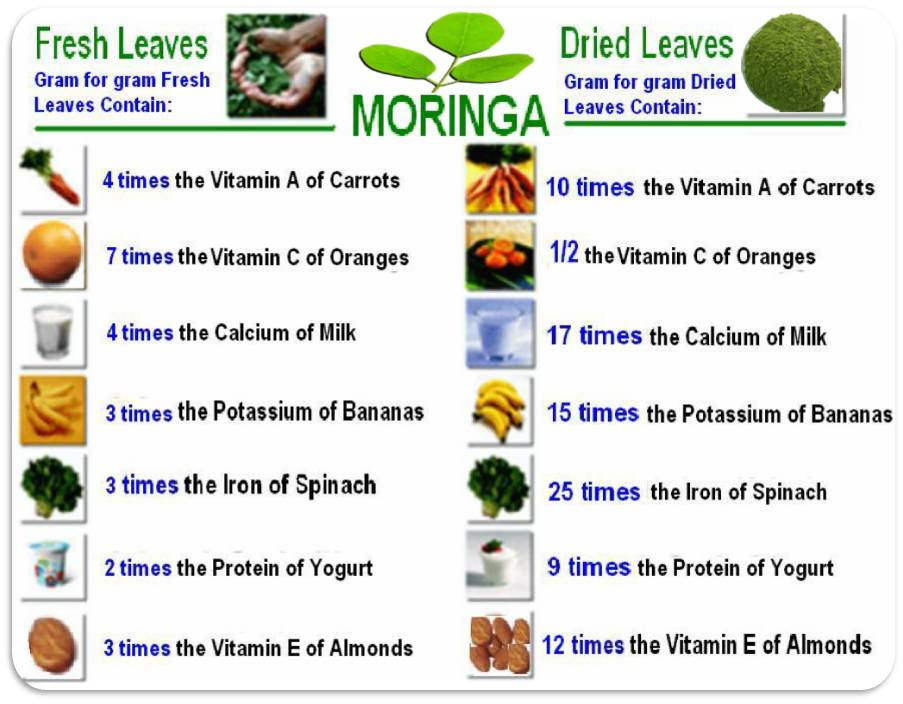 Moringa Nutritional Value