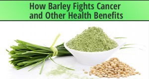 Barley Fights Cancer