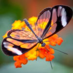 Unfolding Peace Within The Wings of A Butterfly