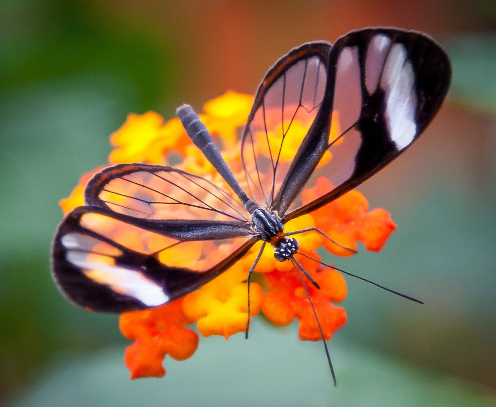 The Butterly Effect - Inner Peace Within
