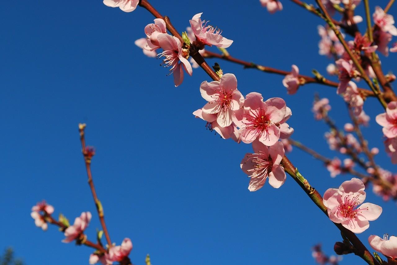 Flower blooming in adversity.