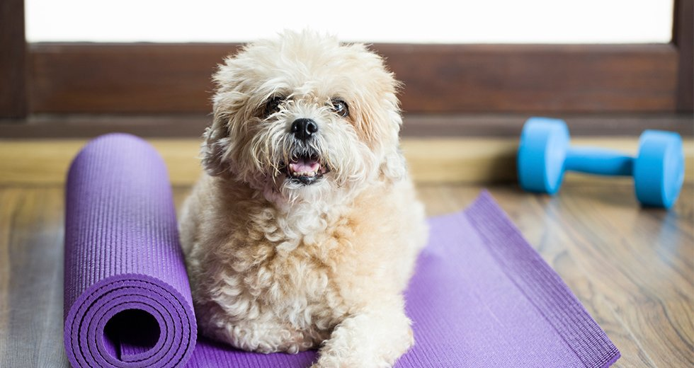 Pets Love Yoga, Too! Here's the Adorable Proof