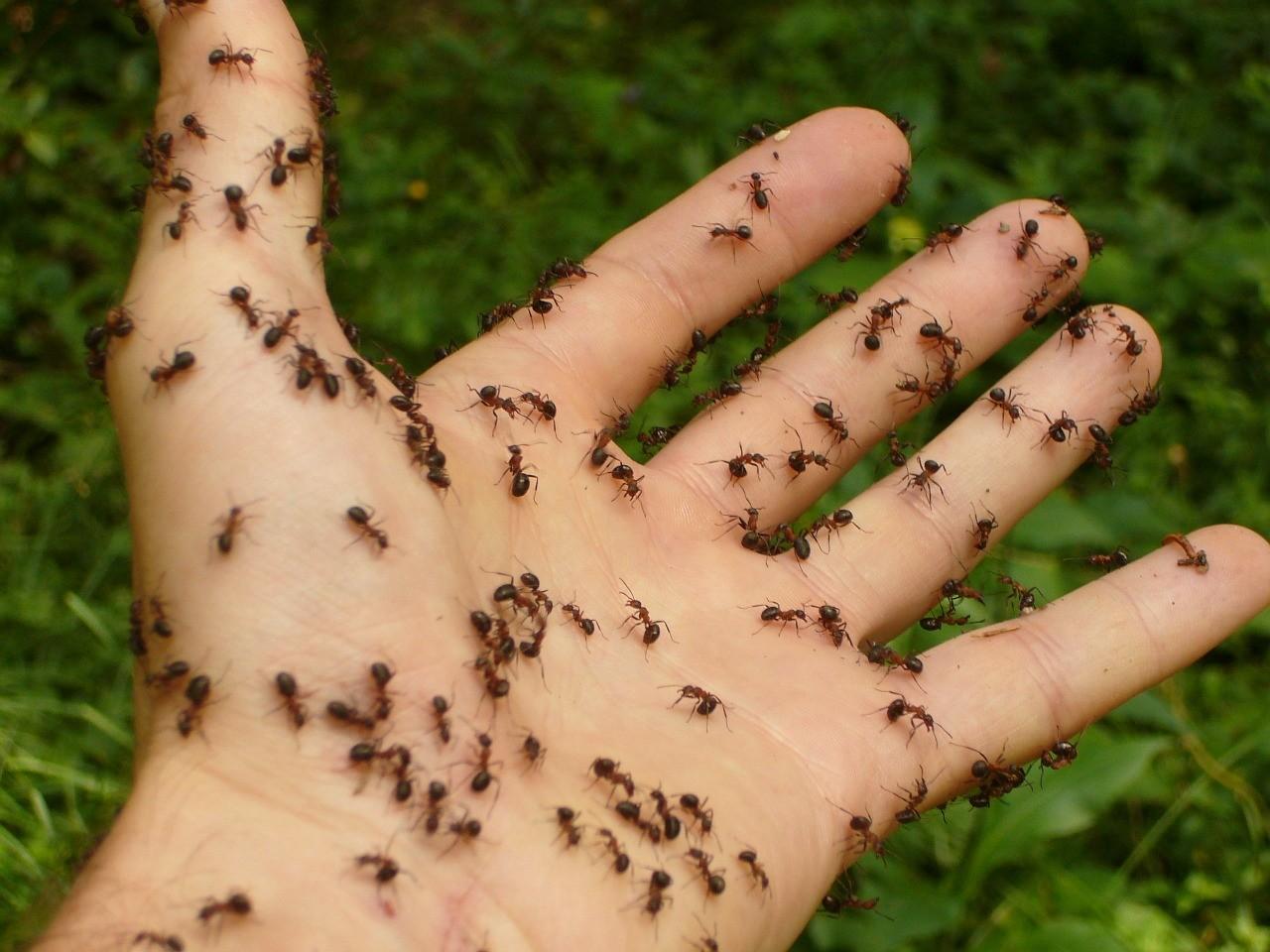 Ant Poison Recipe