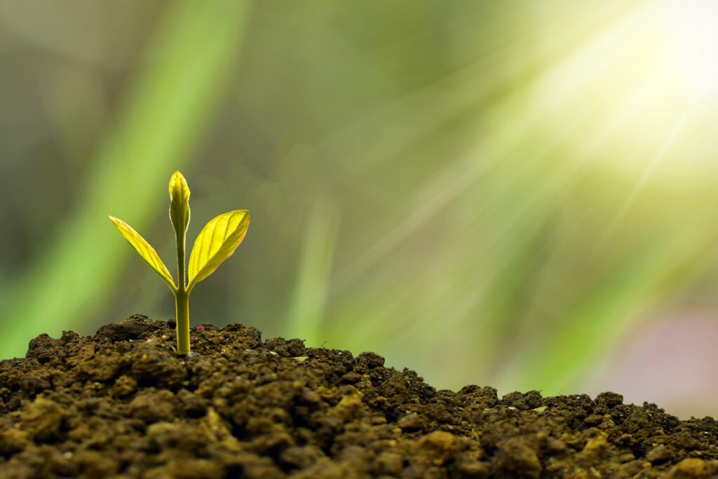 Success:  Start by planting a tree!